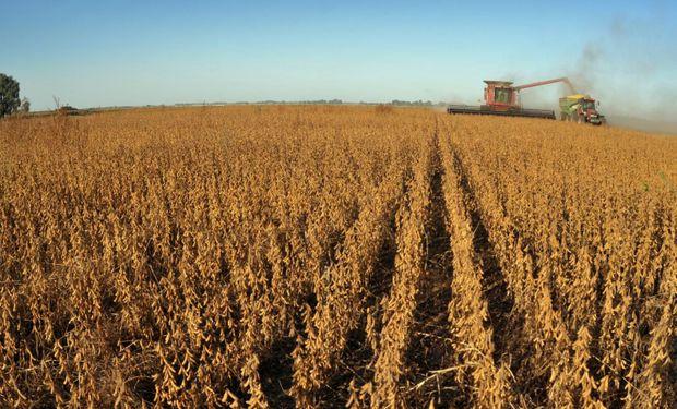 Con impacto local, fuertes bajas para soja, trigo y maíz: mejoró el clima y hay incertidumbre global por el coronavirus