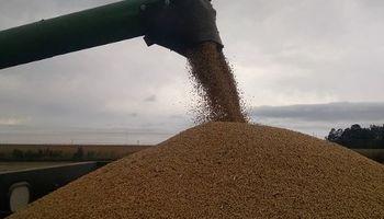 La soja en Chicago tuvo la baja más importante desde antes de que se inicie la cuarentena en Argentina