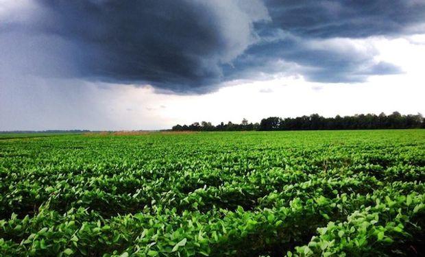 Pronósticos de lluvias sobre regiones productoras de Estados Unidos podrían consolidar los rindes en un momento clave para el desarrollo.