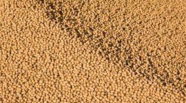 Soja, trigo y maíz, con importante repunte en Chicago: el mercado está pendiente de las pérdidas en Sudamérica