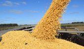 Por qué cayó el precio de la soja local pese a la suba de Chicago