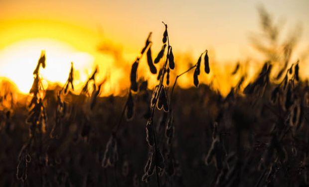 Sigue la recuperación de la soja en Chicago, aunque con poco impacto local