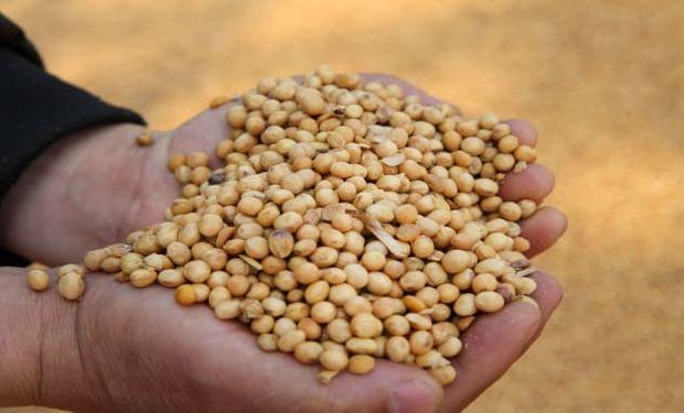 Fuertes subas para la soja en Chicago y Rosario: China realizó la novena compra consecutiva