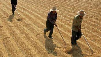 Profetas en China: una empresa argentina hace ensayos de soja en la cuna de la oleaginosa