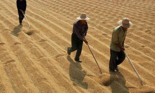 La compañía que nació en la Argentina y se expandió al mundo sojero.