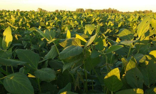 Momento de crucial importancia para el productor, ya que cualquier problema que se presente en el cultivo, podría afectar el rendimiento.
