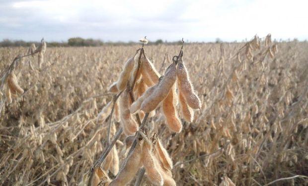 La soja representó un 67 % de la superficie de la gruesa: los hechos que marcaron la cosecha 2019/20