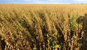 Finalizó la séptima mejor cosecha de soja: por el clima seco, el rinde medio cayó un 12,1 %