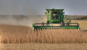 Bajas para soja, trigo y maíz en Chicago: avanza la cosecha y se desacelera la demanda de China