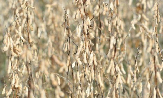Expectativas de una gran cosecha en Estados Unidos limitan las mejoras.
