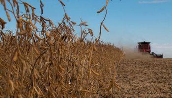 Leve caída en el precio de la soja local en el inicio de la semana