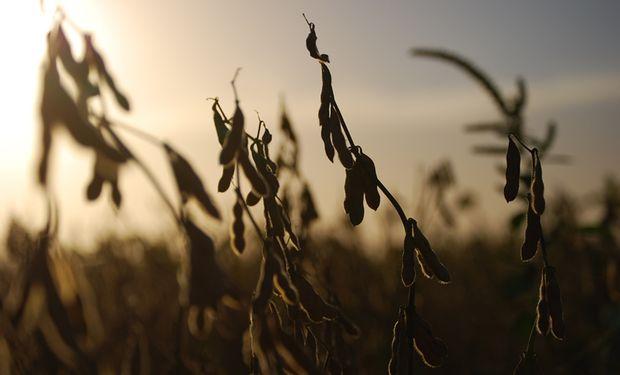 Soja y maíz: ¿vender, cubrir o esperar?