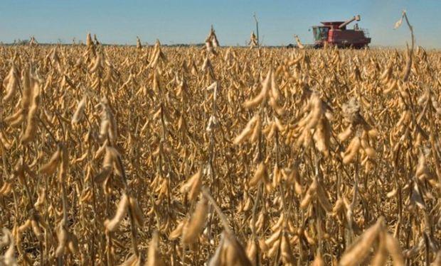 Contrastes extremos en la cosecha de soja.