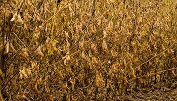 Mejora el panorama de los cultivos en Argentina