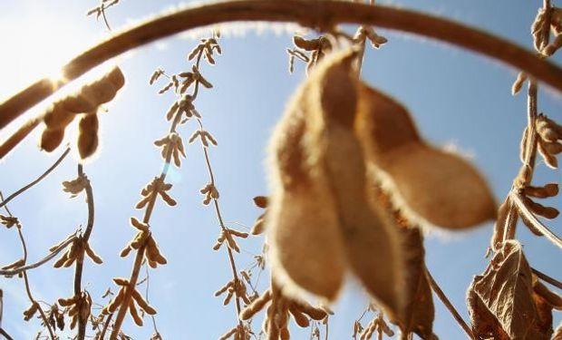 Operadores compraron futuros de soja y vendieron de maíz.