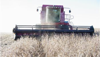 El clima golpea la cosecha de soja en Paraguay