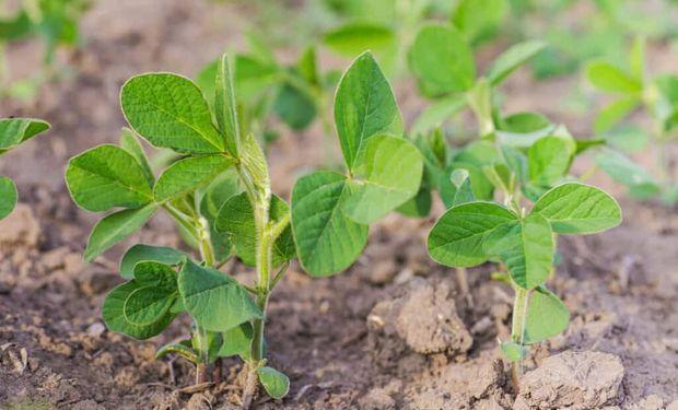 Regresa la operatoria a Chicago con importantes subas para el precio de la soja