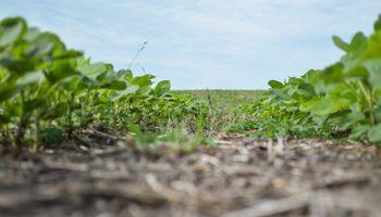 UPL lanza una nueva unidad de negocios basada en la agricultura sustentable