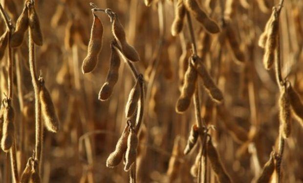 Los futuros de soja y maíz ajustaron el día en alza producto de perspectivas climáticas adversas a los cultivos.