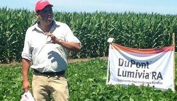 Una nueva alternativa para la soja del norte argentino