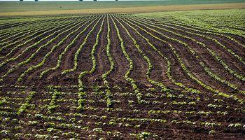 La siembra de soja en Brasil se acerca a su fin