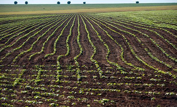 Se sembraría menos soja en EEUU en 2014