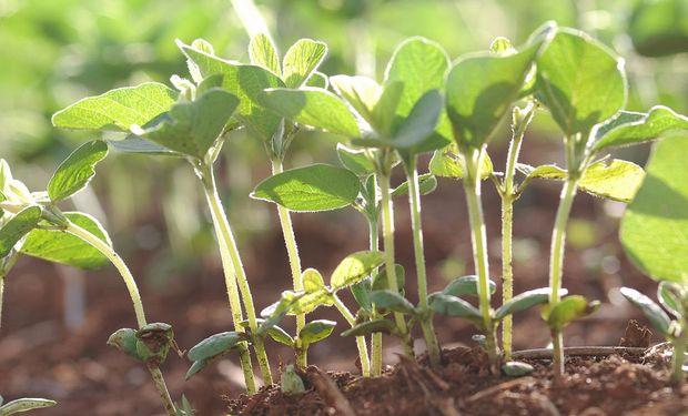 Terminó la siembra de soja de primera