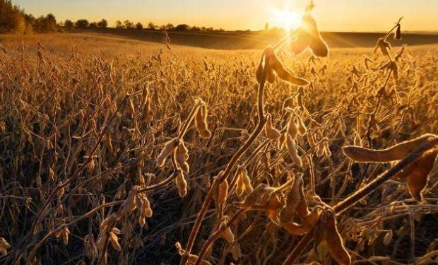 La soja en baja producto de ventas técnicas y lluvias benéficas en Brasil.