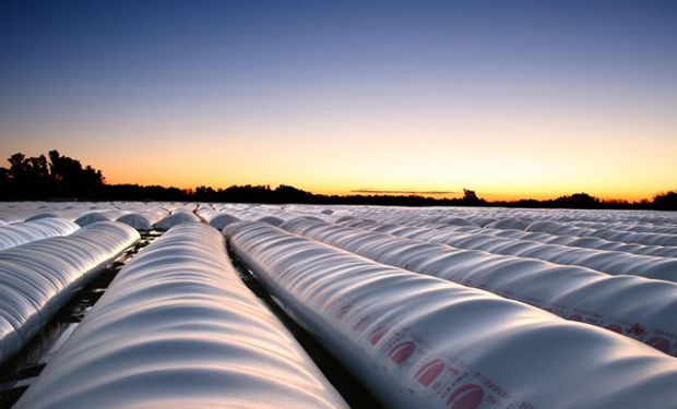 Acopio de soja en Argentina sería de 21,5 millones de toneladas