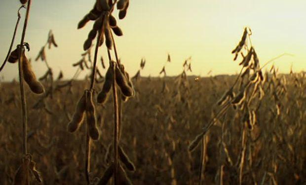 La volatilidad reina en el mercado de granos.