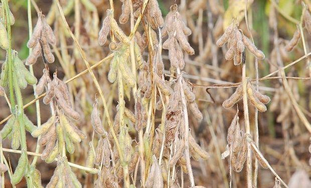 La soja regresa al terreno negativo en Chicago