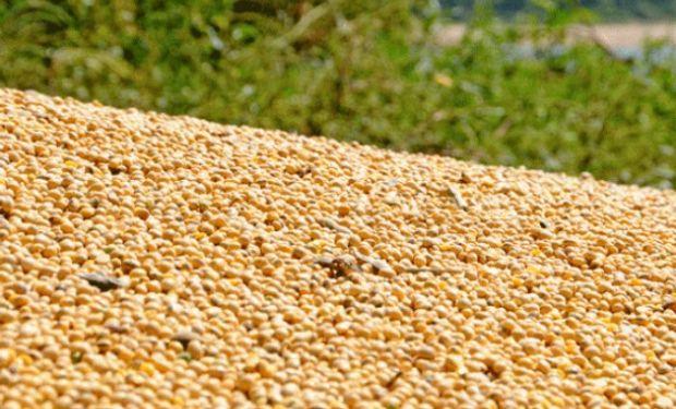 Presiona el ingreso de la cosecha brasilera.