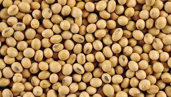 Trastornos en el cobro de regalías sobre la identidad de la semilla