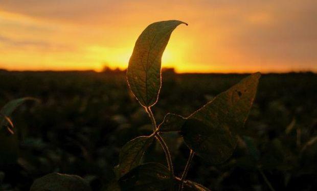 Un respaldo extra para los precios provino del clima seco en partes del norte de Brasil, donde la siembra de soja se está desarrollando.