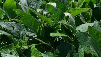 Disminuyó la participación del estado sobre la renta agrícola