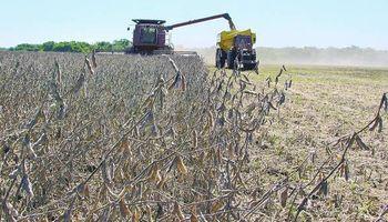 63 millones de toneladas de soja en un año