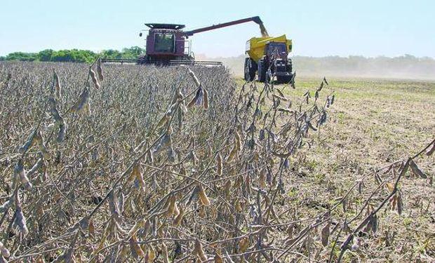 En un año, se negociaron 63 millones de toneladas de soja.
