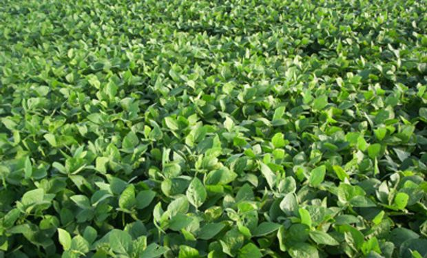 Esta nueva línea de productos para soja fue desarrollada de acuerdo al concepto de inoculación de precisión.