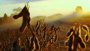 La contracara de la cosecha récord de soja: números en rojo