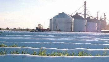 30% de la cosecha de soja sigue en los campos