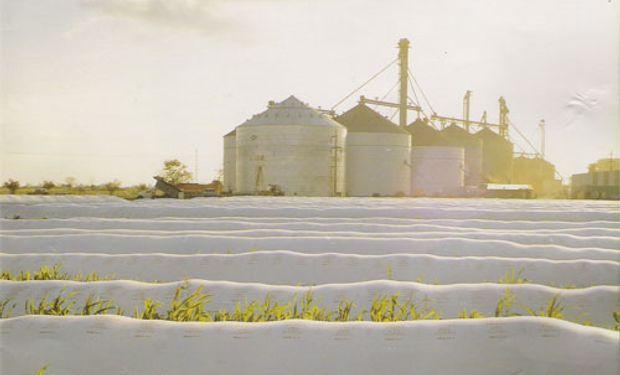 La soja en los silosbolsa funciona como seguro de cambio.