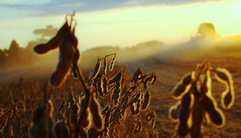 La cadena de la soja, con potencial de crecimiento