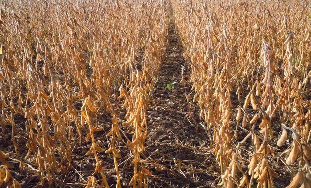 Según el ERAMA el rinde de la soja pasaría- en promedio- de 28 quintales por hectárea a 30 quintales por hectárea en el 2023/2024.