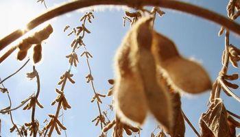 Productores de soja esperan $2.600 para volver a vender