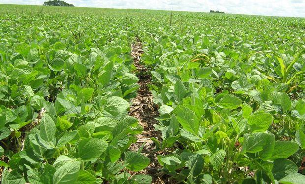 Prevén una suba del 2% de la siembra brasileña de soja.