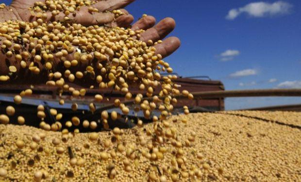 Cuando falta poco para la siembra de soja, temen por la recuperación del real.