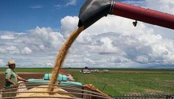 Nuevo recorte para la cosecha de Brasil
