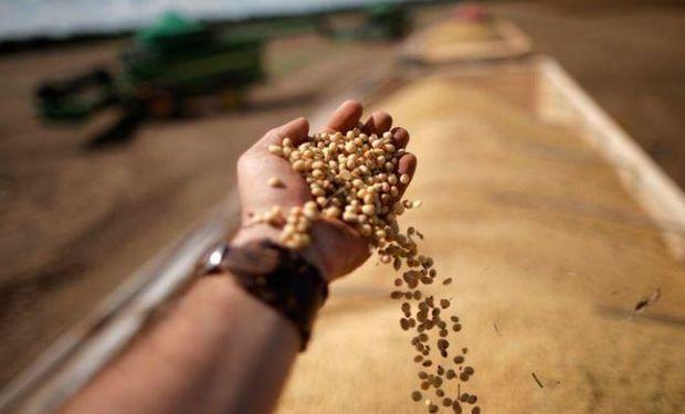 En Brasil, productores ya vendieron más de la mitad de la soja que aún ni se sembró: a qué precio se negocia