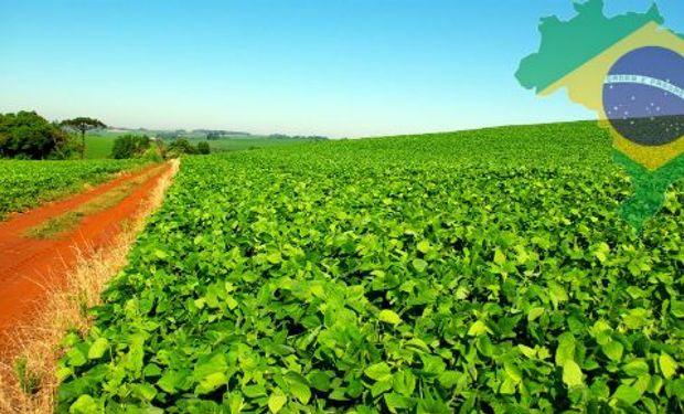 Consultoras brasileras estiman que el área a implantar para el ciclo 2015-16 se incrementaría entre un 1 a un 5%. Fuente: Globaltecnos.