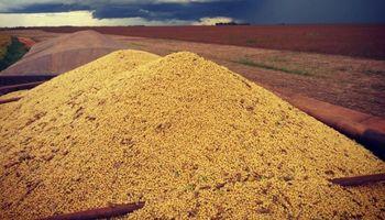 Soja en Brasil: no se descartan pérdidas productivas